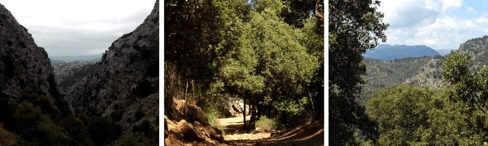 Shinrin yoku o Terapias forestales Mallorca Can Ribera