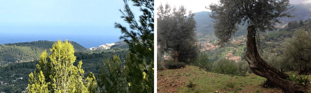 Shinrin yoku o Terapias forestales MallorcaCan Ribera